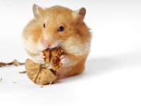 Themenplanung für den Blog: Hamster bloggen entspannter